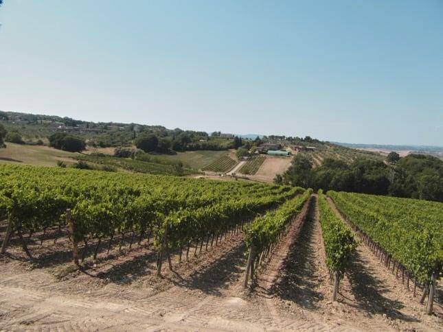 villa-corsano-toscana-vino-vigneto-giardino