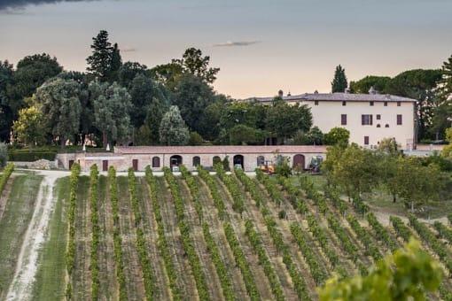 siena-toscana-villa-corsano-vigneto-vigna-vino